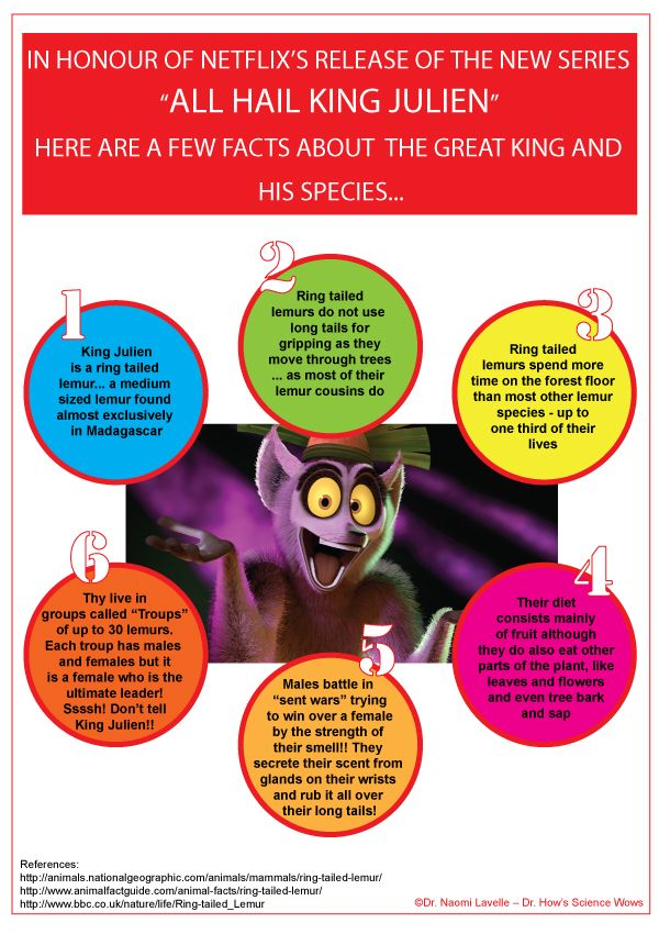 A great Netflix giveaway and some facts about the Madagascar Ring Tailed Lemur