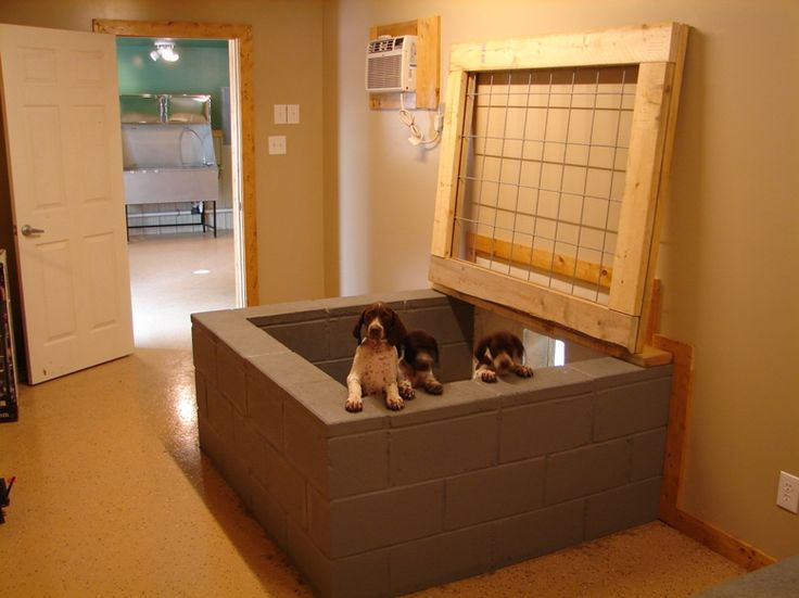 143 best images about dog breeding on pinterest diy dog for Breeding kennel designs