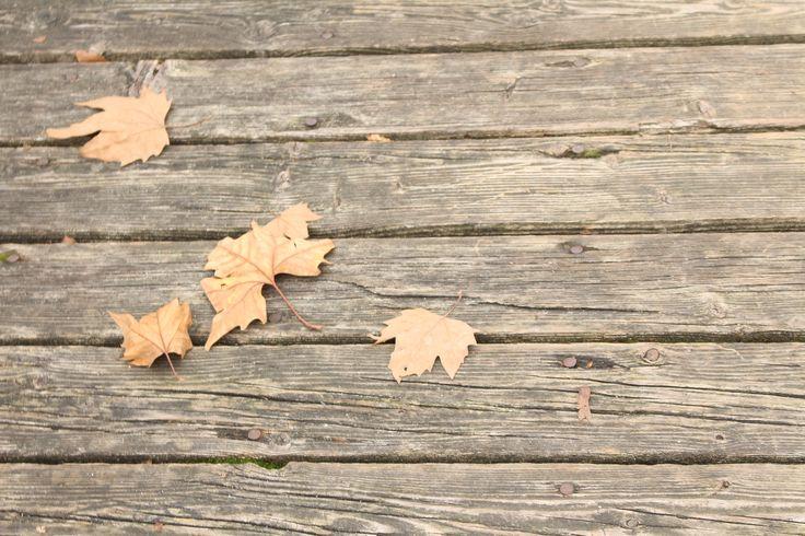 #foglie#composizionelineeforme