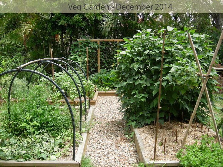 December 2014 - summer growth is phenomenal with plenty to eat.