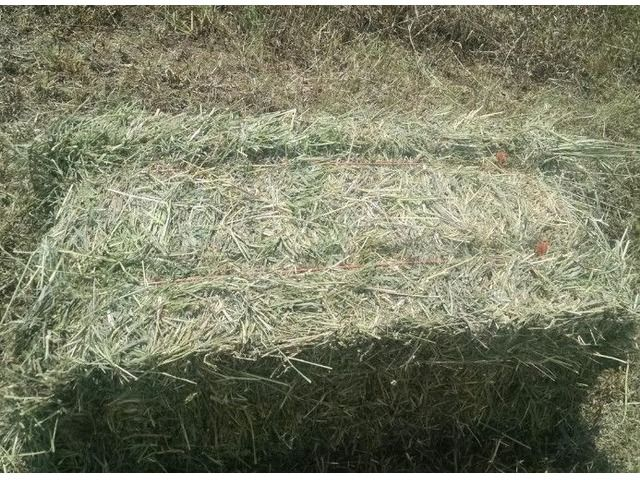 Small Squares – Hay for Sale! Alfalfa & Mixed Grass - Farm & Ranch - Victoria - Illinois - announcement-91074