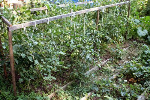 Опоры для томатов - стр. 13 - Томаты в открытом грунте - форум
