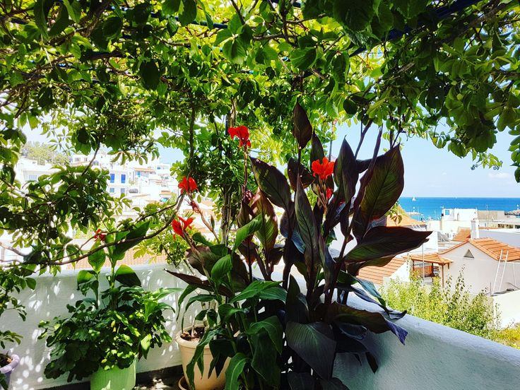 3 months and our jungle will come back to life 🍀🌿🌷🍃 🌍 www.angelosalonissos.com #angelos_apartments #alonissos #sporades #greece #summer #entrance #balcony