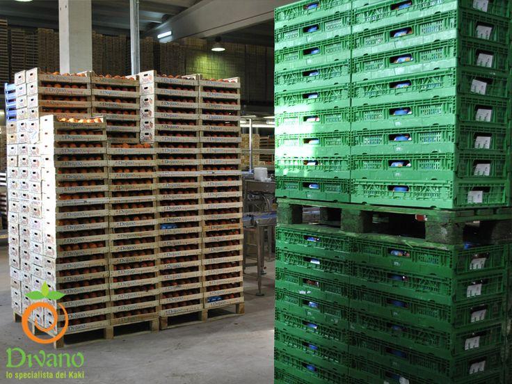 We deliver to GDO also with CPR packaging system. Info: www.divanosrl.it/en Consegniamo i nostri kaki alla GDO con il sistema di imballaggio CPR. Info: www.divanosrl.it