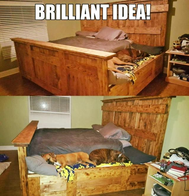 """I have to have it!"" – 27 ingenious and crass living ideas for dogs and cats!"