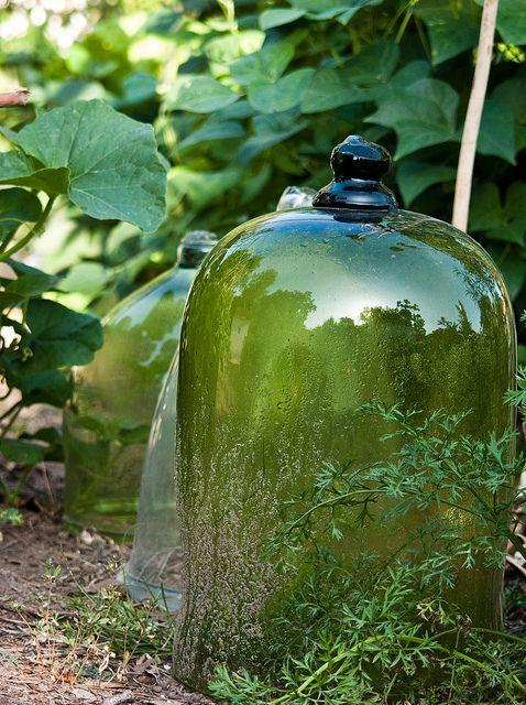 cloches de jardinBelle Jars, Gardens Design Ideas, Green Gardens, Interiors Design, Glasses Dome, Gardens Stuff, Interiors Gardens, Glasses Cloche, Gardens Plants