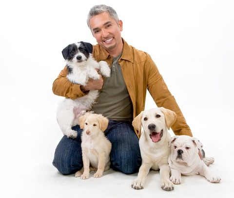 Celebrity dog behaviorist Cesar Millan gives Us Weekly his top tips on how to prepare your dog for a new baby -- get all the details here!