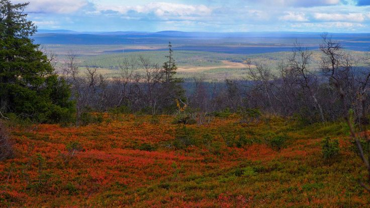 Ruska - autumn colours - on the fells of Finnish Lapland. Photo by Tim Bird Photo.