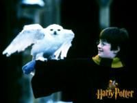 Harry Potter e a Pedra Filosofal « Fanzone Potterish :: Harry Potter, Jogos, Chat, Downloads, tudo para fãs!