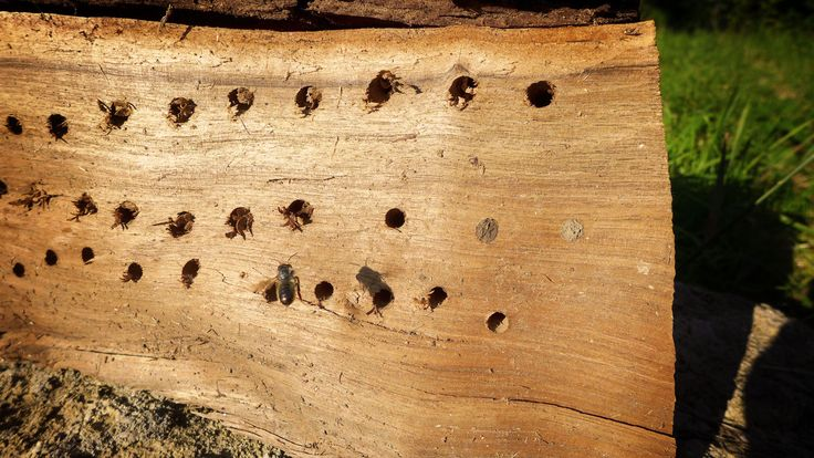 698 best hotels insectes images on pinterest bug hotel - Hotel a insectes ...