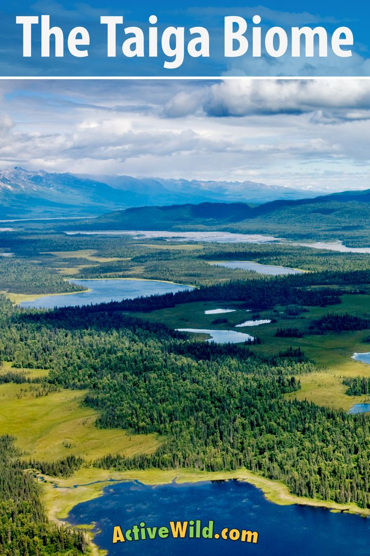 What Is The Taiga Biome? Discover Animals & Plants Of The
