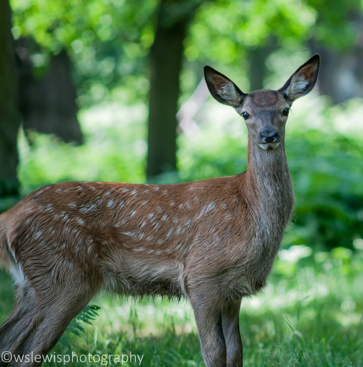 Richmond park has some lovely animals roaming about, but you have to look carefully D300,200mmf/4