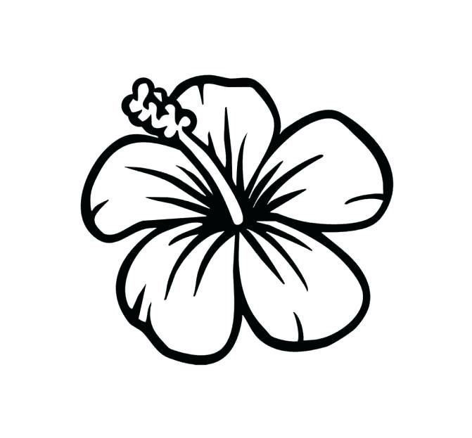 671x623 Hibiscus Coloring Page Hibiscus Flower Coloring Pages Hibiscus Hawaiian Flower Drawing Hibiscus Drawing Flower Coloring Pages