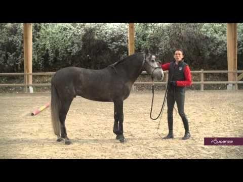 """""""SUIS MOI"""" ou Comment apprendre à votre à votre cheval à vous suivre! - YouTube"""