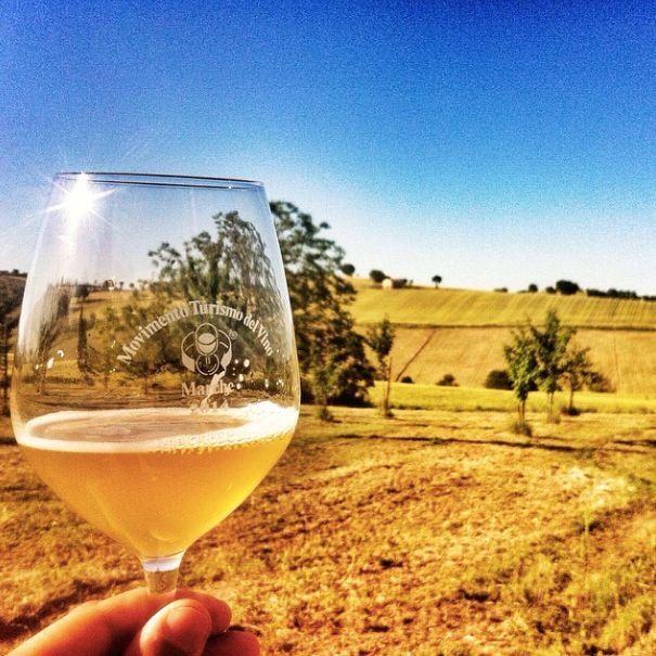 Tra le colline marchigiane a Senigallia, alla ricerca del buon vino