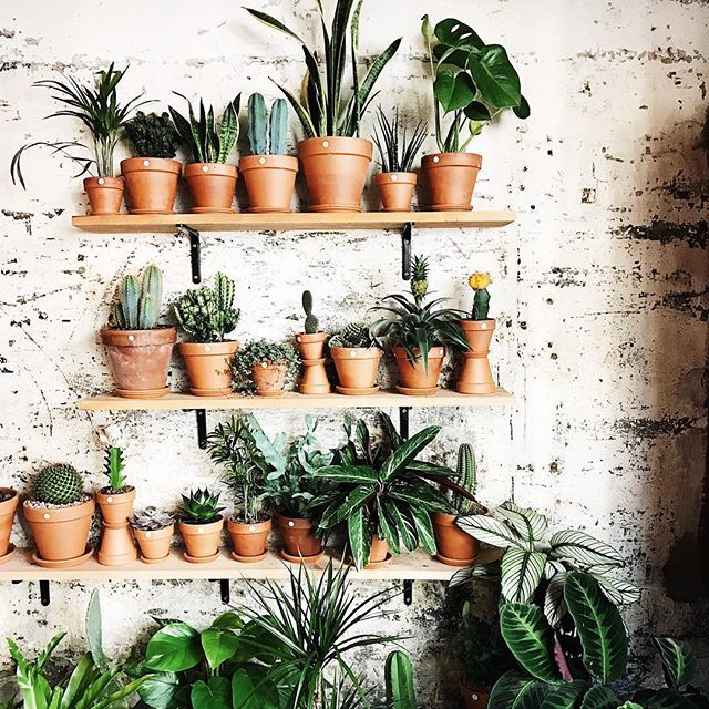 ingenious tropical foliage house plants. This place looks insane  espaijoliu Thanks for the pic craigowilliams Regram via 797 best heart plants images on Pinterest Flowers Plants and