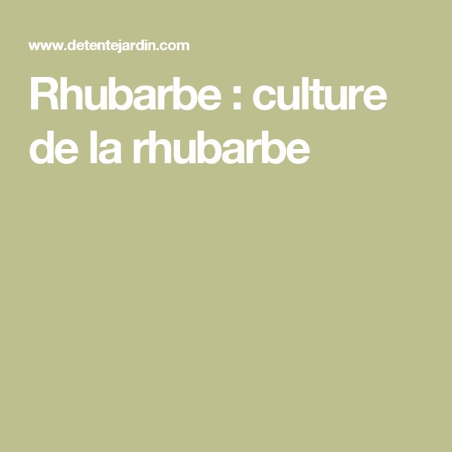 Rhubarbe : culture de la rhubarbe