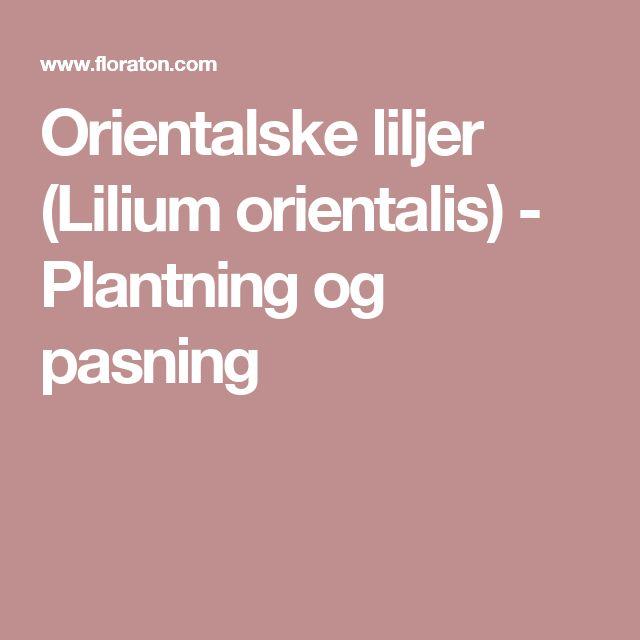 Orientalske liljer (Lilium orientalis) - Plantning og pasning