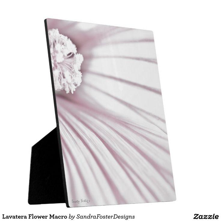 Lavatera Flower Macro Plaque