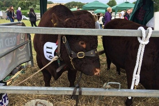 North Devon Show pictures by Bideford reporter Faye Greenwell (18)