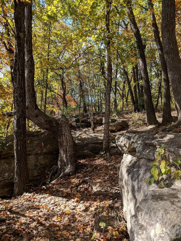 Probably the best photo Ive ever taken. Lewis and Clark Trailhead - Weldon Spring Conservation Area St. Charles County Missouri [OC] - Author: sudsymcduff