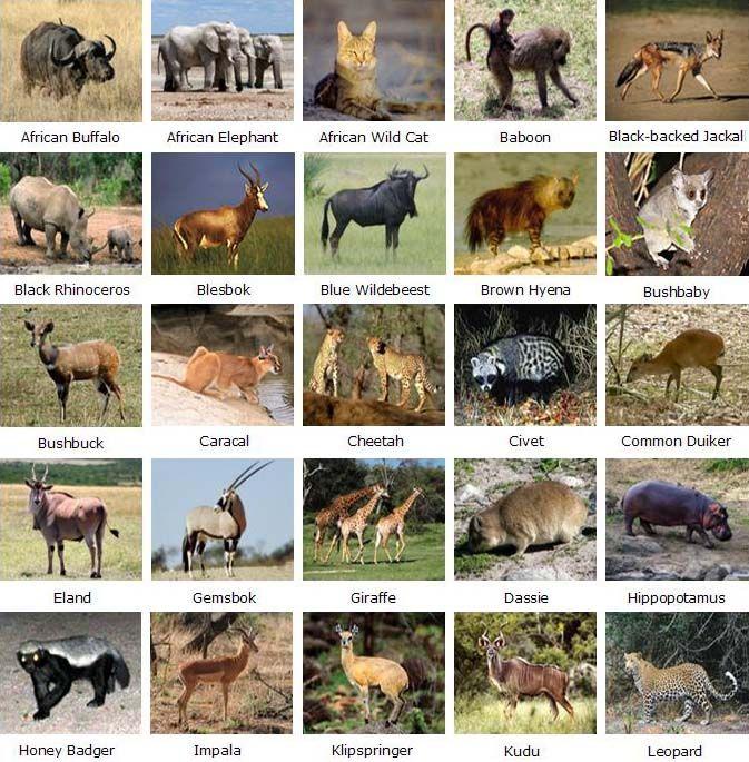 Animals of Kruger National Park - South Africa. BelAfrique your personal travel planner - www.BelAfrique.com