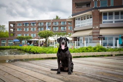 Meet Woody Meg - The Woodmark Hotel Director of Barketing | FIDO Friendly