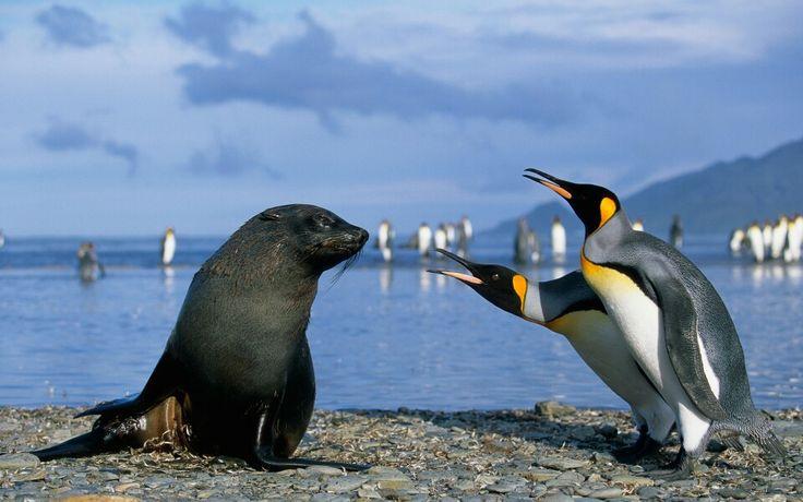 Hello Seal!!
