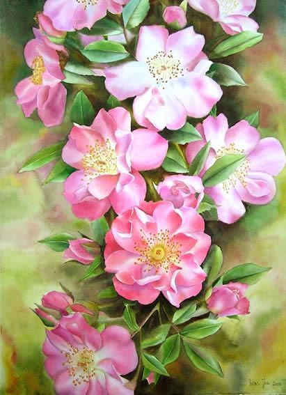 148 best images about watercolor flowers tutorials on for How to paint a rose step by step