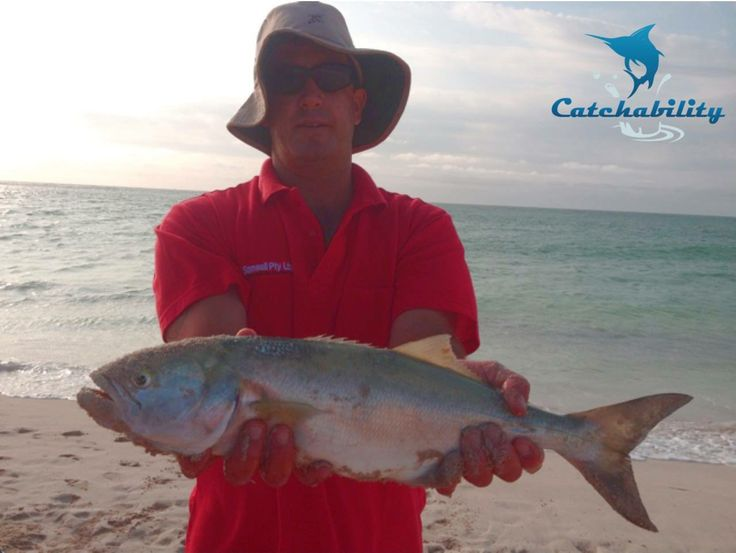 Beautiful Tailor caught by Robert Milner with Pilchards.  http://www.catchability.com/