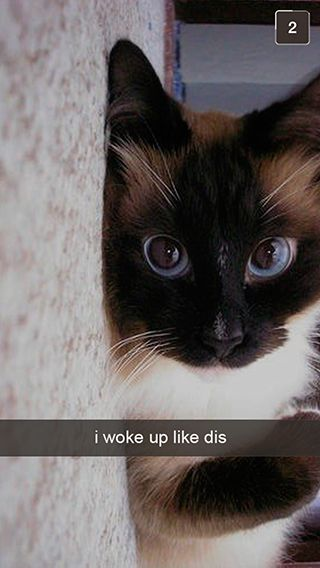 27 Snapchats From Your Cat | Buzzfeed lolllololololol for days