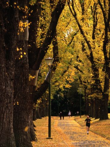 Fitzroy Gardens - Melbourne, Australia  So this is what it looks like in Autumn...beautiful. We were there in August, so the branches were bare!