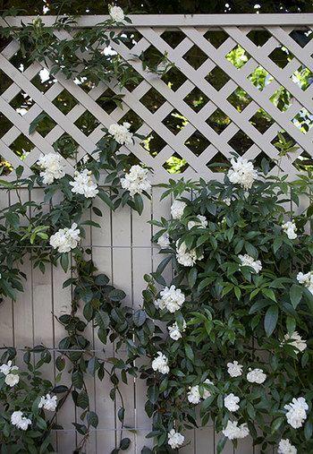 外からの視線が気になる場所には、ラティスをフェンス代わりにして、植物を這わせましょう。格子作りだすチェック柄が、皮いらしい雰囲気に。これなら、重たい雰囲気にならなくていいですね。