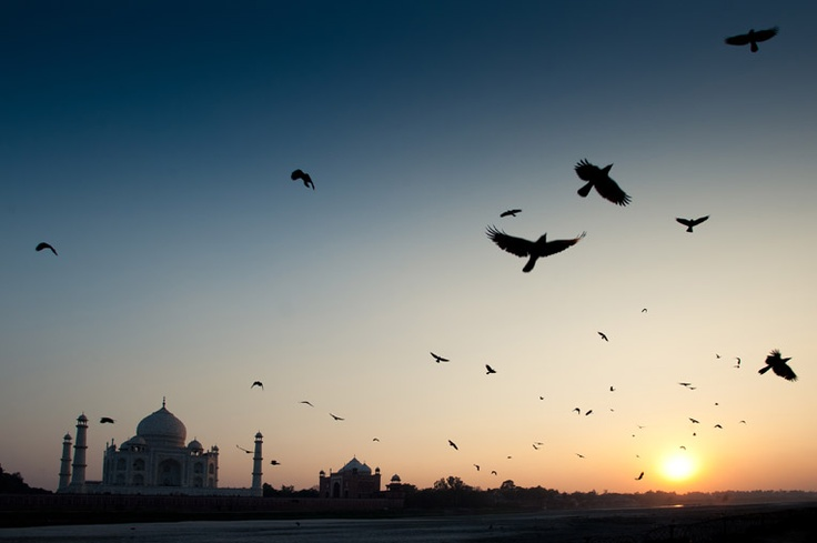 Documentary travel photography in India: Raven Birds, India
