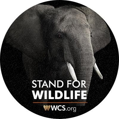 The Wildlife Conservation Society saves wildlife and wild places worldwide through science, conservation action, education, and inspiring people to value nature.