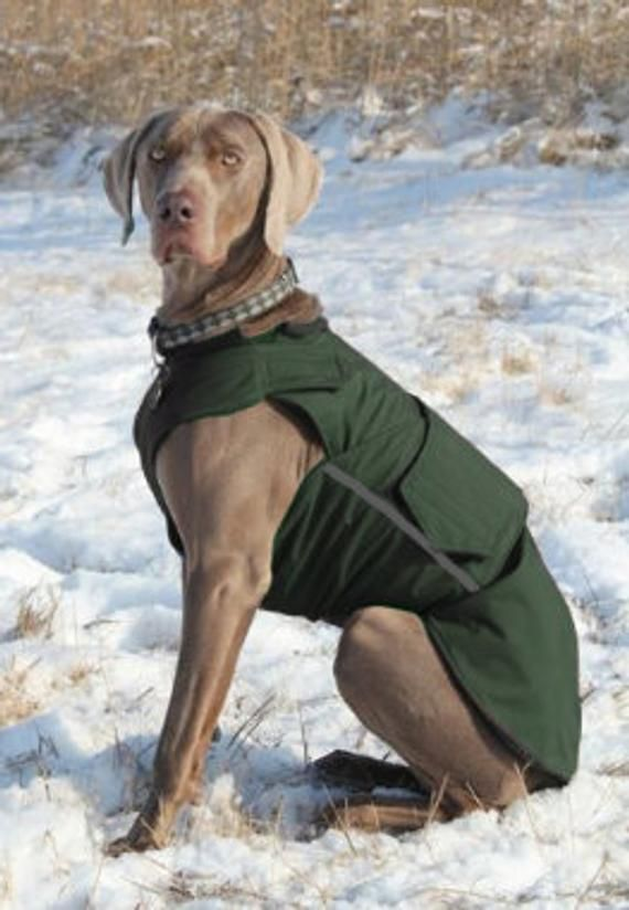 Weimaraner Softshell Hund Mantel Braun Winter Hund Mantel Custom Hund Regenmantel Softshell Fleece Mantel Made To Measure In 2020 Weimaraner Dog Winter