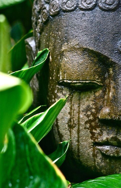 No one saves us but ourselves. No can and no one may. We ourselves must walk the path.  ~ Buddha
