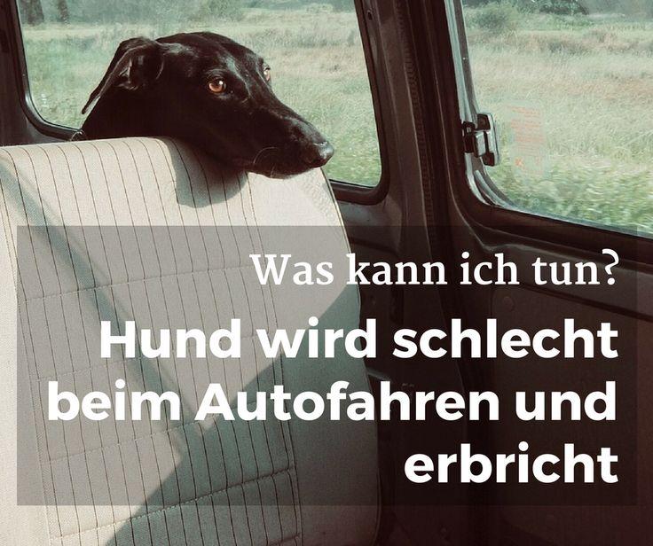 #Hund wird schlecht beim #Autofahren und #erbricht, was kann ich tun? #Übelkeit #Erbrechen #Auto
