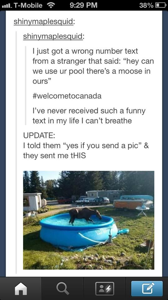 Hey, can we use your pool? There's a moose in ours.
