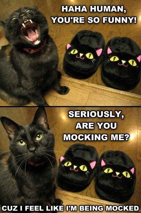 Literally just laughed out loud at this....poorly kitty :-P