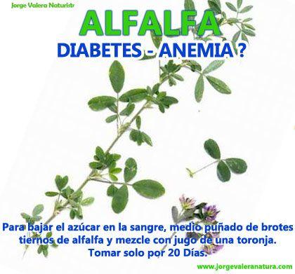 PLANTAS MEDICINALES Alfalfa
