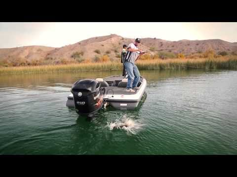 1000 images about videos on pinterest parks boats and for Lake havasu fishing