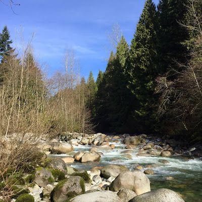 'Devastated pine to eco-design': Canadian co. Killwood