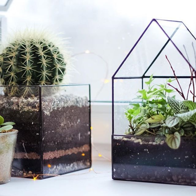 Интересно наблюдать за растением в стеклянной форме как слой за слоем грунта пробиваются корни и захватывают пространство ! Форма квадрата очень гармонична и даёт возможность создавать интересную комбинацию слоёв и большой объём что важно для многих растений ! У нас в наличии квадраты размером 10/10, 15/15 и 20/20 сантиметров ! #stereometricdesign #glasscube #kaluga #handcraft #airplant #herbarium #diy #deco #design #interior #homeinterior #plants #cactus #succulent #aesthetic #tiffany…