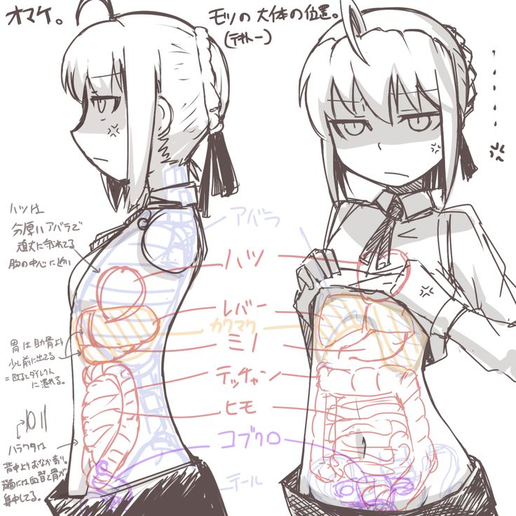 Body proportions; Gut space .