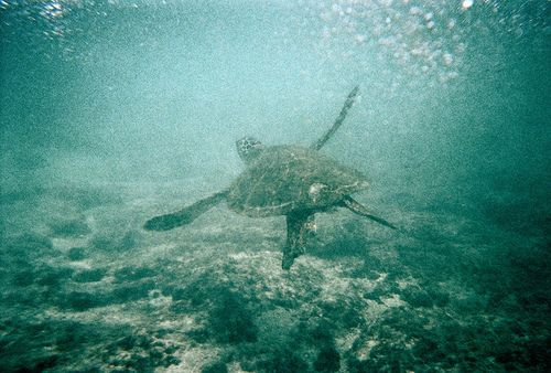 Sea Turtle: Sea Life, Pure Spirit, Beaches Life, The Ocean, Blue Green, Beautiful Sea, Places, Sea Turtles, Ocean Life