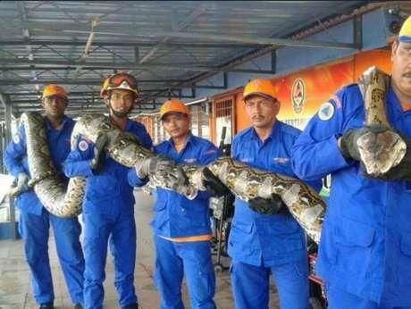 Python de 8 metros.