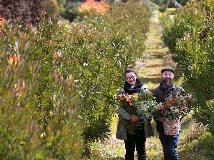 Native gatherers: Empire Proteas a tribute to Peter Richardson's father   The Weekly Times