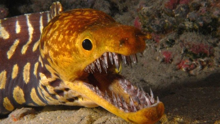 The Biggest and Most Dangerous Top 10 Marine Animals at present