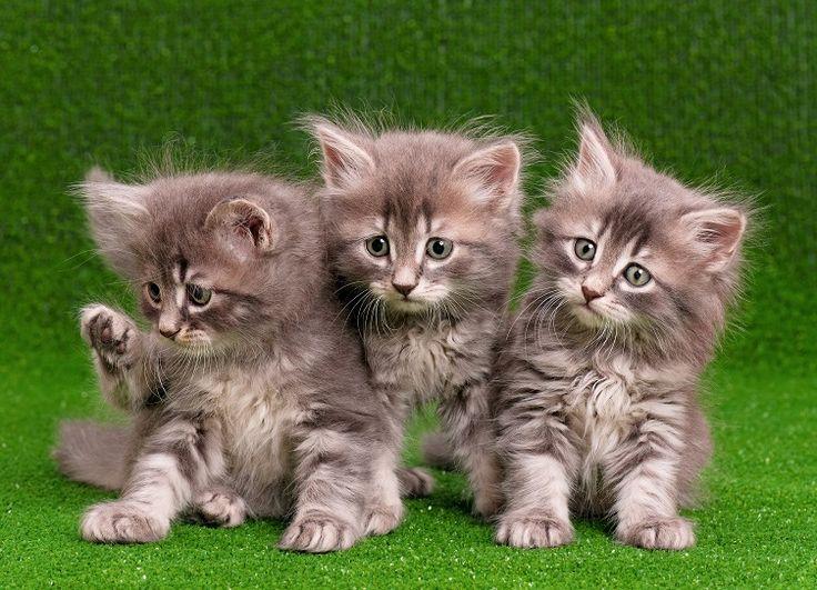 Dzień dobry i udanego życzymy Wam dnia! http://www.fototapeta24.pl/ #dziendobry #goodmorning #cats #sweet #fototapeta #fototapeta24pl